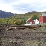 Bilde av tømmerstokker på tomta